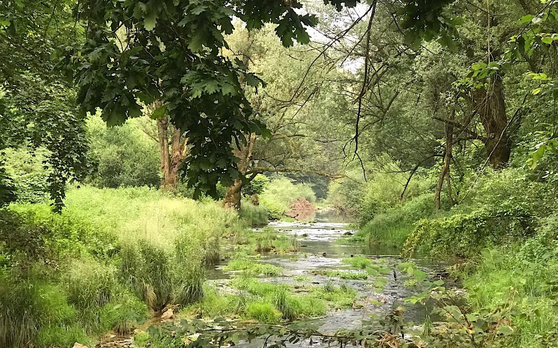 Nebenfluss des Flusses Krka