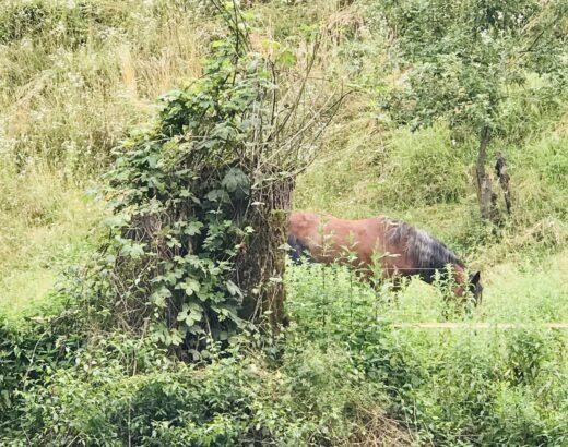 horse in slovenia